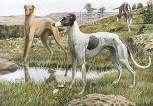 Greyhounds in Country by Louis Agassiz Fuertes