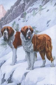 Two Saint Bernards by Louis Agassiz Fuertes