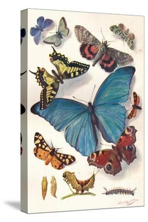Example of Colour Block Illustration for Scientific Work, C1903