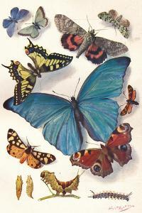 Example of Colour Block Illustration for Scientific Work, C1903 by Louis Fairfax Muckley