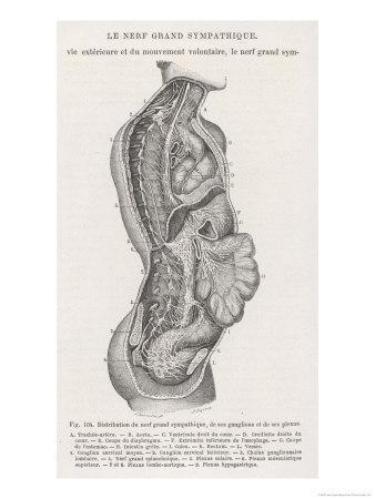 The Nervous System of the Spine