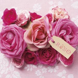 Rose by Louis Gaillard