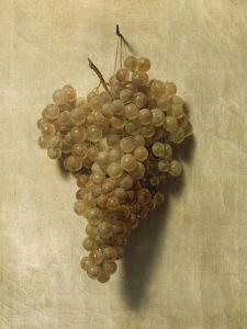White Grape by Louis Leopold Boilly