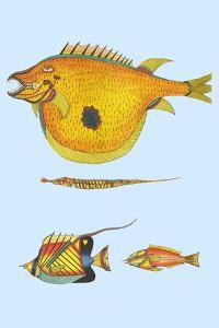 Rarest Curiosities of the Fish of the Indies by Louis Renard