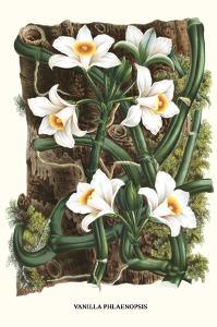 The Vanilla Orchid by Louis Van Houtte