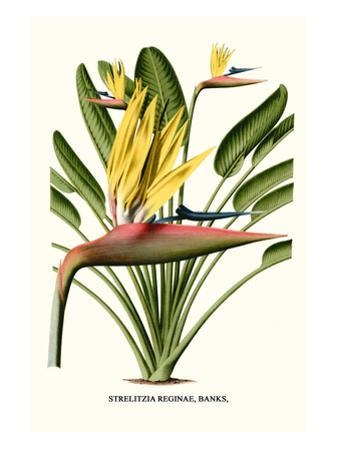 Yellow Bird of Paradise - Mandela's Gold by Louis Van Houtte