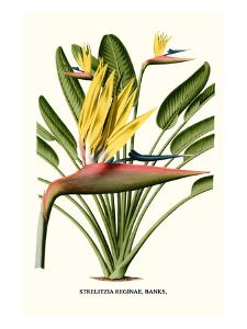 Yellow Bird of Paradise - Mandela's Gold by Louis Van Houtte
