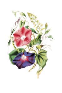 Flowers by Louise Anne Twarmley
