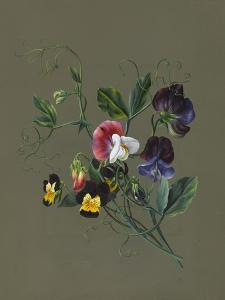 Sweet Peas (Quitro) and Violas, 1830 (W/C and Bodycolour on Paper with a Prepared Ground) by Louise D'Orleans