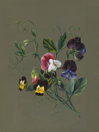 Sweet Peas (Quitro) and Violas, 1830 (W/C and Bodycolour on Paper with a Prepared Ground)