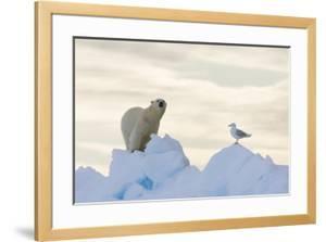 Polar Bear And Seagull by Louise Murray