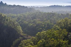 Rainforest in Tully Gorge National Park by Louise Murray
