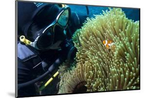Scuba Diver with False Clown Anenomefish, Magnificent Sea Anemone, Cairns, Queensland, Australia by Louise Murray