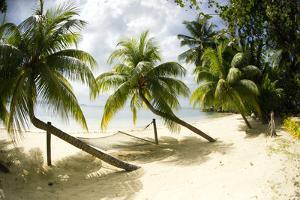 Tropical Island Beach with Hammock at Matangi Island Resort, Vanua Levu, Fiji, Pacific by Louise Murray