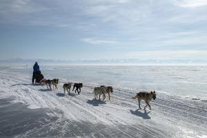 Visitors Enjoying Dog Sledding by Louise Murray