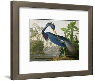 "Louisiana Heron from ""Birds of America""-John James Audubon-Framed Premium Giclee Print"
