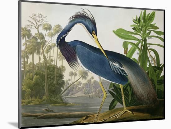 "Louisiana Heron from ""Birds of America""-John James Audubon-Mounted Premium Giclee Print"