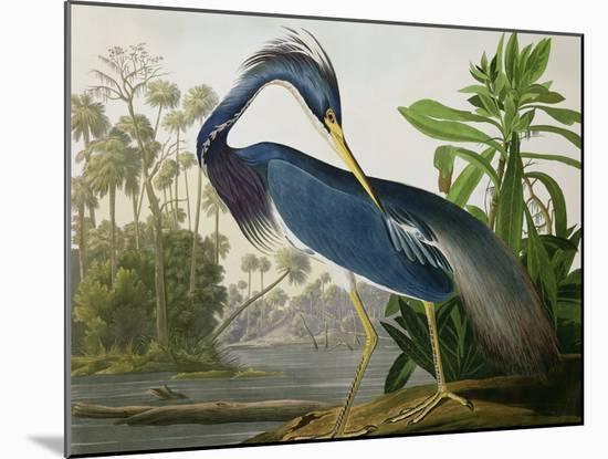 "Louisiana Heron from ""Birds of America""-John James Audubon-Mounted Giclee Print"