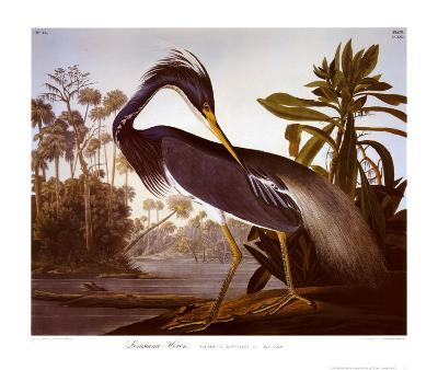 Louisiana Heron-John James Audubon-Art Print