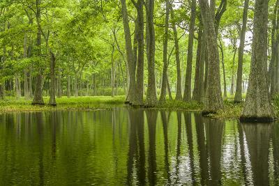 Louisiana, Miller's Lake. Tupelo Trees in Swamp-Jaynes Gallery-Photographic Print