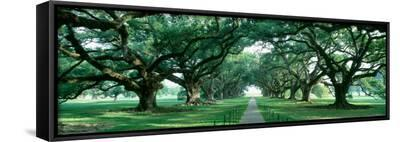 Louisiana, New Orleans, Brick Path Through Alley of Oak Trees--Framed Canvas Print