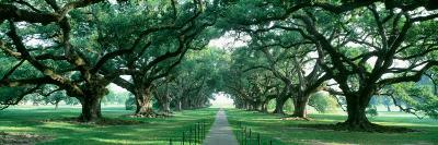 Louisiana, New Orleans, Brick Path Through Alley of Oak Trees--Photographic Print