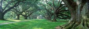 Louisiana, New Orleans, Oak Alley Plantation, Plantation Home Through Alley of Oak Trees