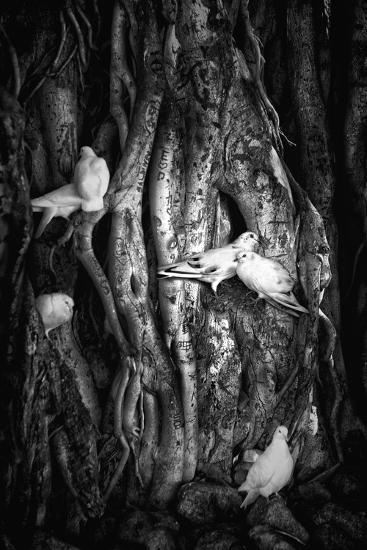 Love Birds In Banyan Tree, HawaII-Dee Smart-Photographic Print