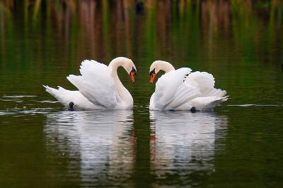 Love Birds-Colin Carter Photography-Photographic Print