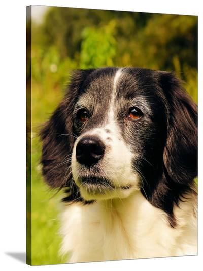 Lovely Dog Pet Animal-Wonderful Dream-Stretched Canvas Print