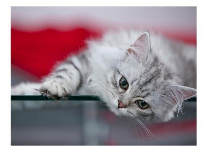 Lovely Kitten-Melanie Viola-Art Print