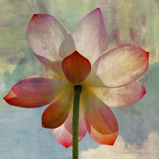 Lovely Lily II-Anna Polanski-Art Print