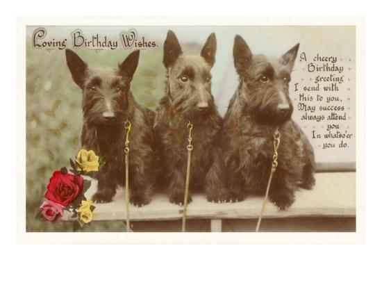 Loving Birthday Wishes Three Scottie Dogs