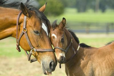 Loving Mare and Foal