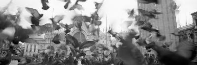 Low Angle View of a Flock of Pigeons, St. Mark's Square, Venice, Italy--Photographic Print