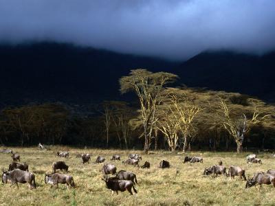 Low Cloud Hangs Over Zebra and Wildebeest at Ngorongoro Crater, Arusha, Tanzania-Ariadne Van Zandbergen-Photographic Print