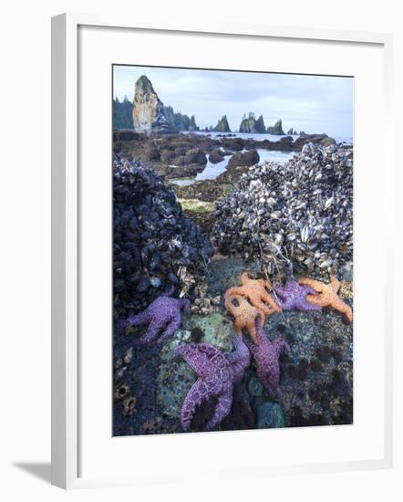 Low Tide at Point of Arches, Olympic National Park, Washington, USA-Gary Luhm-Framed Photographic Print