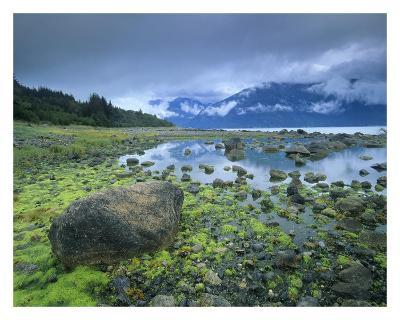 Low tide revealing algae covered rocks, Alaska-Tim Fitzharris-Art Print