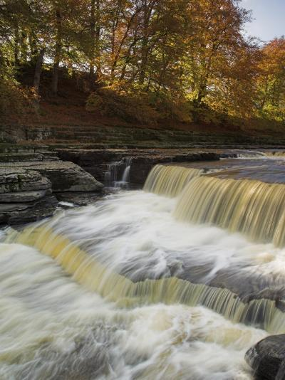 Lower Aysgarth Falls and Autumn Colours Near Hawes, Yorkshire Dales National Park, Yorkshire-Neale Clarke-Photographic Print