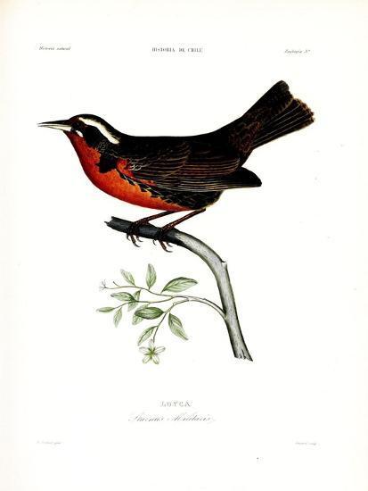 Loyca, Atlas de La Historia Física y Política de Chile, 1854-Claudio Gay-Premium Giclee Print