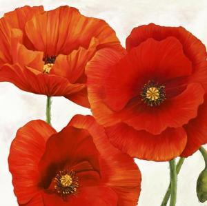 Poppies I by Luca Villa