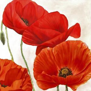 Poppies II by Luca Villa