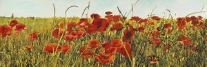 Poppy Field by Luca Villa