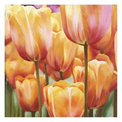 Spring Tulips II