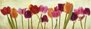 Tulip parade by Luca Villa