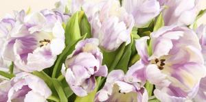 Tulipes en Fleur by Luca Villa
