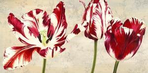 Tulipes Royales by Luca Villa
