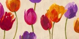 Tulips & Colors by Luca Villa
