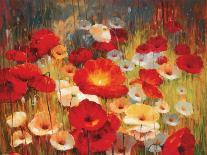 Meadow Poppies II-Lucas Santini-Art Print