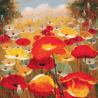 Meadow Poppies IV by Lucas Santini